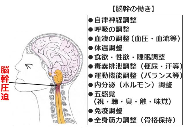 脳幹圧迫の図と脳幹の働き